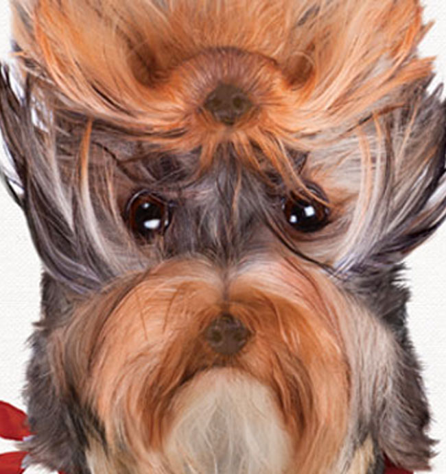 Dechra Veterinary Products – Vetoryl®
